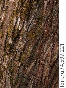 Кора дерева. Стоковое фото, фотограф Иван Носов / Фотобанк Лори