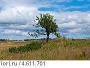 Поле. Стоковое фото, фотограф Юлия Деденок / Фотобанк Лори