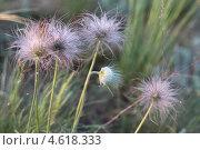 Полевые цветы. Стоковое фото, фотограф Валентин Шумаков / Фотобанк Лори