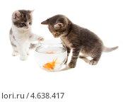 Купить «Два котенка и круглый аквариум с золотыми рыбками», фото № 4638417, снято 15 мая 2013 г. (c) Ирина Кожемякина / Фотобанк Лори