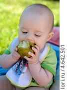 Купить «Ребенок ест грушу летом», фото № 4642501, снято 29 июня 2010 г. (c) Мария Сударикова / Фотобанк Лори