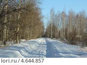 Зимний лес. Стоковое фото, фотограф Надежда Бурцева / Фотобанк Лори