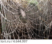 Сети паутины. Стоковое фото, фотограф Михаил Дозоров / Фотобанк Лори