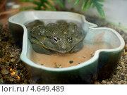 Жаба в зоопарке. Стоковое фото, фотограф Ксения Козырь / Фотобанк Лори