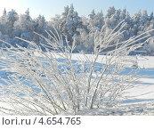 Зимнее утро в лесу. Стоковое фото, фотограф Регина Каирова / Фотобанк Лори