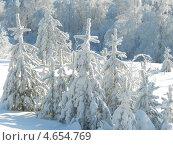 Зимний лес. Стоковое фото, фотограф Регина Каирова / Фотобанк Лори
