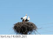 Купить «Гнездо с аистами, Псков», эксклюзивное фото № 4669261, снято 21 апреля 2013 г. (c) Дмитрий Неумоин / Фотобанк Лори