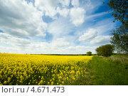 Купить «Рапсовое поле», фото № 4671473, снято 12 мая 2013 г. (c) Сурикова Ирина / Фотобанк Лори