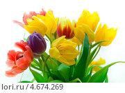 Купить «Букет разноцветных тюльпанов», фото № 4674269, снято 13 марта 2013 г. (c) Сурикова Ирина / Фотобанк Лори