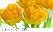 Купить «Букет желтых тюльпанов», фото № 4674385, снято 10 апреля 2013 г. (c) Сурикова Ирина / Фотобанк Лори