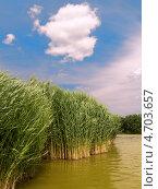 Камыши. Стоковое фото, фотограф Alexandr Mukhin / Фотобанк Лори