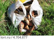 Рыба в пакете. Стоковое фото, фотограф Вадим Бахир / Фотобанк Лори