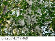 Тополиный пух. Стоковое фото, фотограф Андрей Горшков / Фотобанк Лори