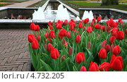 Купить «Нидерланды. Красные тюльпаны у фонтана в парке цветов  Кёкенхоф (Keukenhof)», видеоролик № 4732205, снято 12 апреля 2013 г. (c) Виктория Катьянова / Фотобанк Лори