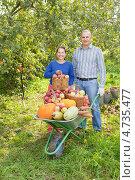 Купить «Женщина и мужчина с урожаем в саду», фото № 4735477, снято 12 сентября 2012 г. (c) Яков Филимонов / Фотобанк Лори