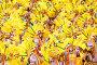 Танцоры в желтых костюмах на карнавале в Самбодромо в Рио-де-Жанейро 11 февраля 2013 г., Бразилия, фото № 4742321, снято 11 февраля 2013 г. (c) Михаил Мандрыгин / Фотобанк Лори