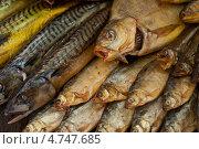 Купить «Копченая рыба, фон», фото № 4747685, снято 10 апреля 2013 г. (c) Jan Jack Russo Media / Фотобанк Лори