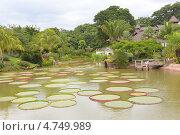 Пейзаж тропического парка с кувшинкой Виктория амазонская. Фокус на кувшинках. Стоковое фото, фотограф Dmitry Burlakov / Фотобанк Лори
