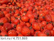 Шиповник, плоды. Стоковое фото, фотограф Роман Лущик / Фотобанк Лори