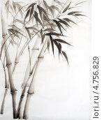Купить «Побеги бамбука, акварель», иллюстрация № 4756829 (c) Вероника Суровцева / Фотобанк Лори