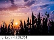 Красочный закат. Стоковое фото, фотограф Игорь Алиев / Фотобанк Лори