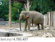 Купить «Индийский слон в пражском зоопарке. Чехия.», фото № 4780497, снято 12 июля 2007 г. (c) Ирина Балина / Фотобанк Лори