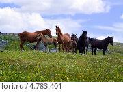 Табун лошадей. Стоковое фото, фотограф Яков Филимонов / Фотобанк Лори