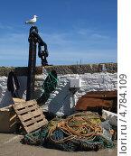Чайка на якоре, Англия, графство Корнуолл, (Cornwall, UK) (2013 год). Редакционное фото, фотограф Гурова Анна / Фотобанк Лори