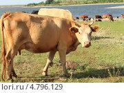 Водопой. Редакционное фото, фотограф Александер Ляпин / Фотобанк Лори