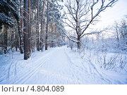 Купить «Дорога зимой в лесу», фото № 4804089, снято 1 января 2010 г. (c) Станислав Фридкин / Фотобанк Лори