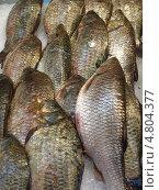 Рыба на рынке Марселя (2009 год). Стоковое фото, фотограф Александр Элеазер / Фотобанк Лори