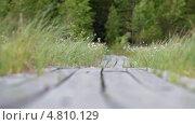 Купить «Дорожка среди болота из досок», видеоролик № 4810129, снято 29 июня 2013 г. (c) Кекяляйнен Андрей / Фотобанк Лори