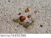 Купить «Янтарики на пляже», эксклюзивное фото № 4810589, снято 15 июня 2013 г. (c) Ната Антонова / Фотобанк Лори