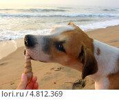 Купить «Собака с ракушкой на песчаном пляже», фото № 4812369, снято 26 февраля 2010 г. (c) Мария Московская / Фотобанк Лори