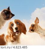 Купить «Смешные домашние животные - кот и две собаки на фоне неба», фото № 4823485, снято 23 марта 2019 г. (c) Sergey Nivens / Фотобанк Лори