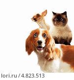 Купить «Забавные домашние любимцы - две породистые собаки и толстый кот», фото № 4823513, снято 20 сентября 2018 г. (c) Sergey Nivens / Фотобанк Лори
