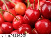 Красная спелая черешня крупным планом. Стоковое фото, фотограф Digifuture / Фотобанк Лори
