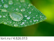 Капли росы на зеленом листе крупным планом. Стоковое фото, фотограф Digifuture / Фотобанк Лори