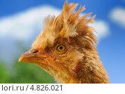 Цыпленок с хохолком на фоне неба. Стоковое фото, фотограф Digifuture / Фотобанк Лори