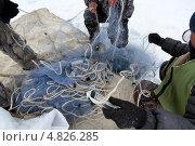 Купить «Вид на рыболовную сеть, которую мужчины забрасывают в прорубь на озере», эксклюзивное фото № 4826285, снято 13 марта 2013 г. (c) Николай Винокуров / Фотобанк Лори
