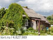 Деревенский дом а Ленобласти, обвитый диким виноградом. Стоковое фото, фотограф Анна Сапрыкина / Фотобанк Лори