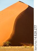 Купить «Вертикальный вид на песчаную дюну в национальном парке Намиб-Науклуфт, Намибия, Южная Африка», фото № 4828277, снято 19 июня 2013 г. (c) Николай Винокуров / Фотобанк Лори