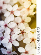 Купить «Весенний фон», фото № 4832473, снято 16 апреля 2013 г. (c) Наталия Кленова / Фотобанк Лори