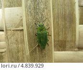 Тропическое насекомое. Стоковое фото, фотограф Юрий Храмов / Фотобанк Лори