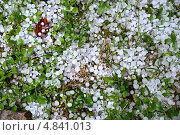 Купить «Град на зеленой траве», фото № 4841013, снято 5 июля 2013 г. (c) Эдуард Кислинский / Фотобанк Лори