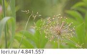 Купить «Природа», видеоролик № 4841557, снято 24 июня 2013 г. (c) Юрий Александрович Балдин / Фотобанк Лори