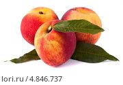 Купить «Три абрикоса с зелёным листками изолированные на белом фоне», фото № 4846737, снято 22 июня 2013 г. (c) Литвяк Игорь / Фотобанк Лори