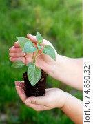 Молодой росток в руках. Стоковое фото, фотограф DementevaJulia / Фотобанк Лори
