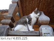 Кот в деревне (2013 год). Стоковое фото, фотограф Анастасия Новодержкина / Фотобанк Лори