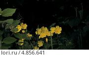 Купить «Желтые луговые цветы», видеоролик № 4856641, снято 24 июня 2013 г. (c) Юрий Александрович Балдин / Фотобанк Лори